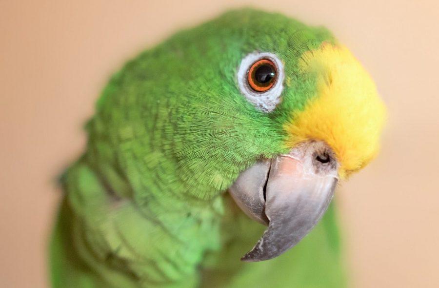 The adorable parrots