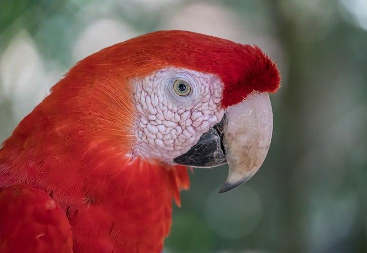 talking parrot price